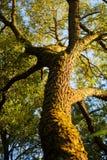 高结构树 免版税库存图片