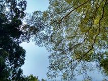 高结构树 库存图片