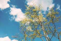 高年轻树机盖  晴朗的日 结构树上面的分行 库存照片
