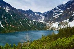 高Tatra Mountains湖森林晃动喀尔巴汗 库存图片