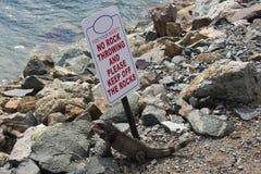 鬣鳞蜥就是不可能读 免版税库存图片