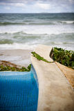 鬣鳞蜥游泳池边 图库摄影