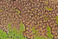 鬣鳞蜥皮肤 免版税库存图片