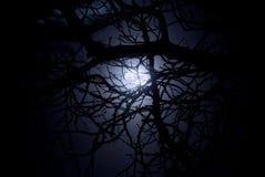 鬼午夜的月光 免版税库存照片