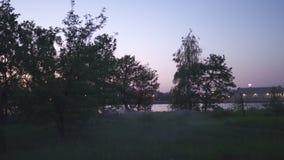 鬼的平衡的薄雾在有生动的日落颜色的桃红色里加,拉脱维亚市公园和紫罗兰色在背景中和可怕 股票视频