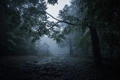 鬼的有薄雾的多雨森林 免版税图库摄影