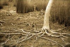 鬼的树 免版税图库摄影