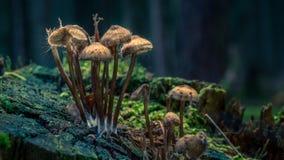 鬼的蘑菇 免版税图库摄影