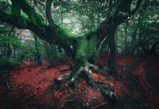 鬼的结构树 雾的神秘的黑暗的森林 免版税图库摄影