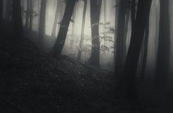 鬼魂在万圣夜在有foH的神奇黑暗的森林里 免版税库存图片