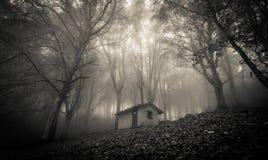 鬼魂房子在有薄雾的森林里 库存照片
