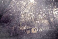 鬼魂房子在有雾的森林里 库存图片