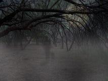 鬼魂森林 库存图片