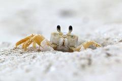 鬼魂螃蟹 库存照片