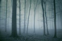 鬼黑暗的森林的场面 免版税库存图片