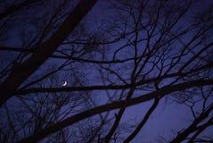 鬼黑暗的横向 干燥森林和杉木的黑暗的概述的透视与满天星斗的天空的夜在背景 库存图片