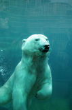 魁北克,在动物园sauvage de Saint FA©licienn的熊 库存照片