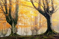魔术森林在秋天 免版税库存图片