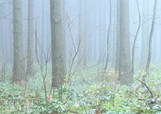 魔术森林 免版税图库摄影