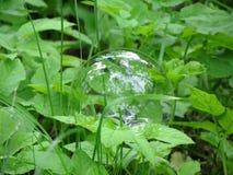 魔术球 它反射古老的杉木 库存图片