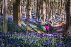 魔术的森林 库存图片