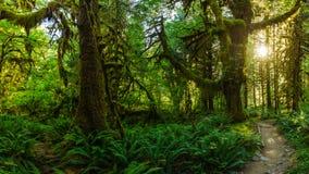 魔术的森林 库存照片