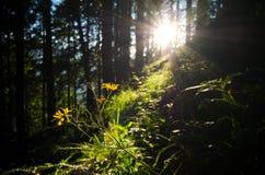 魔术的森林 免版税库存图片