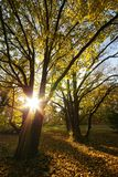 魔术秋天的森林 免版税库存照片