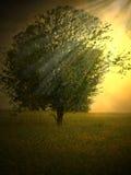 魔术结构树 图库摄影