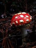 魔术蘑菇 免版税图库摄影