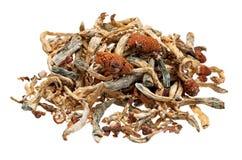 魔术采蘑菇堆 免版税库存图片