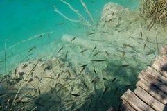 鱼一点 免版税图库摄影
