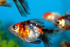 鱼一点 免版税库存照片