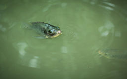 鱼一点 库存照片