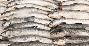 鱼三文鱼 免版税库存图片