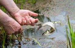 鱼从fishman跳 免版税库存照片