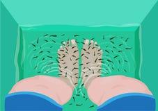 鱼修脚或按摩概念 脚顶视图在温泉按摩木盆的用Fish医生或Garra rufa填装了 编辑可能的剪贴美术 库存例证