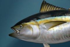 鱼充塞了 免版税库存图片