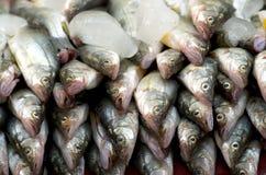 鱼冰了 免版税图库摄影