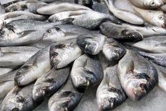 鱼冰堆银 库存照片