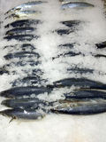 鱼冰市场 库存图片