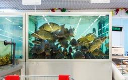 活鱼准备好待售在大型超级市场 免版税库存图片