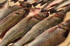 鱼原始的销售额 免版税库存图片