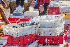 鱼和冰在塑料盘子 免版税库存照片