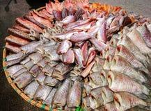 鱼和大蒜干燥在晴天 免版税库存图片