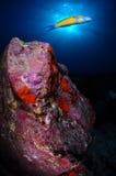 鱼和太阳在加拉奇科 库存图片