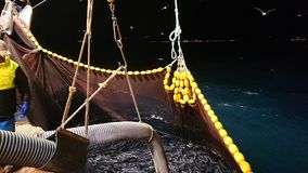 鱼和捕获 库存图片