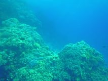 鱼和珊瑚在海 图库摄影