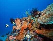 鱼和生态系海底  库存照片