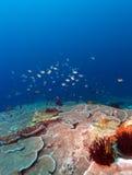 鱼和生态系海底  免版税库存图片